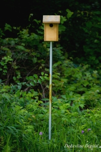 A birdhouse by Genesee Community College