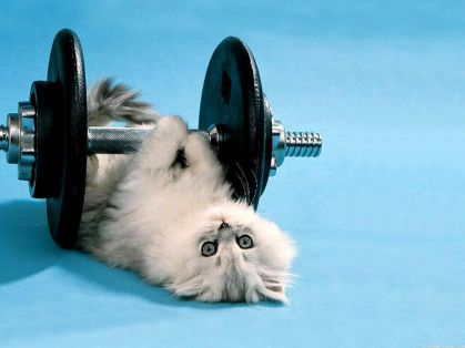 Funny-Kitten-Lifting-Weights-Images.jpg
